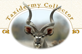 Taxidermt Collecter